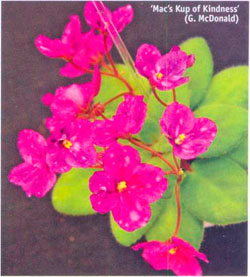 'Mac's Kup of Kindness' (G. McDonald)